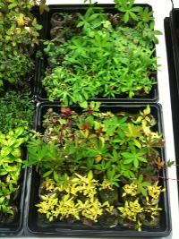 Plants 2 April 13