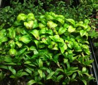 Plants 4 April 13